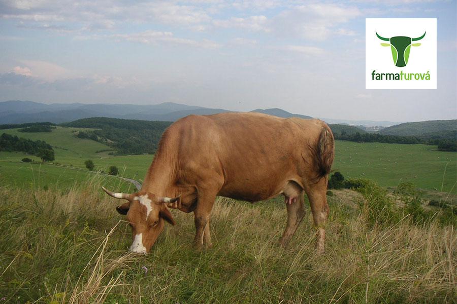 Skutočný príbeh mäsa - EkoFarma Turová